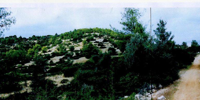 Katakali -8220. (1)